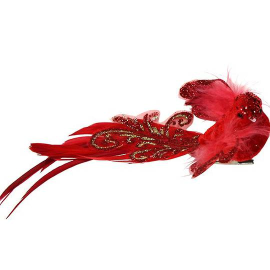 Clip, Red Feather Bird