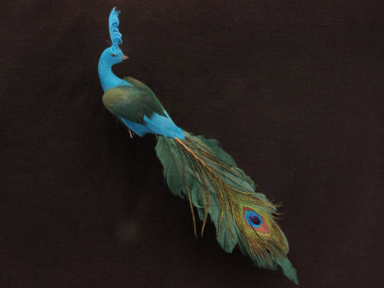 BirdClip Peacock Flock/Feather 12x25cm