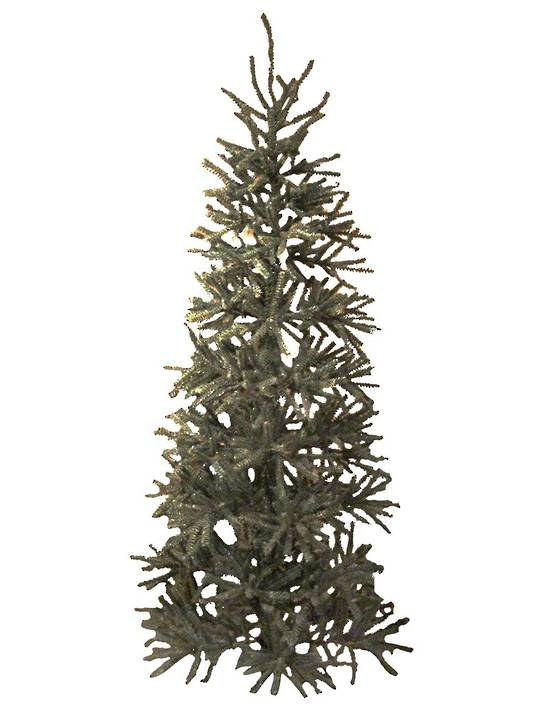 Tall Blue Spruce Tree 2.1 mtr