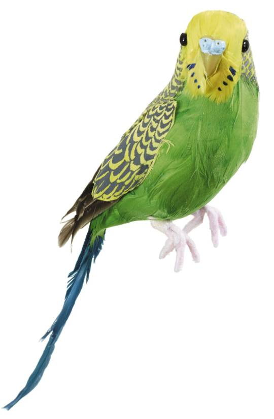 Budgerigar Green/Yellow 20cm