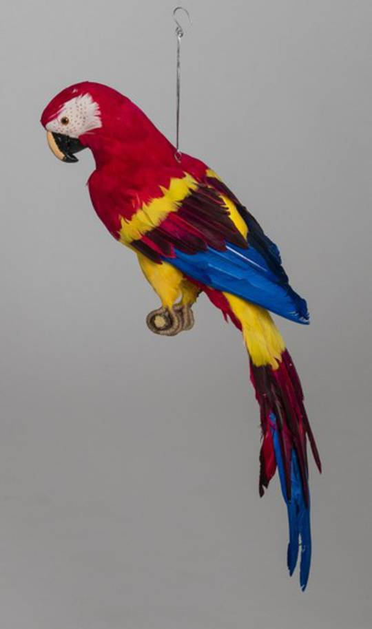 Red Macaw 68cm